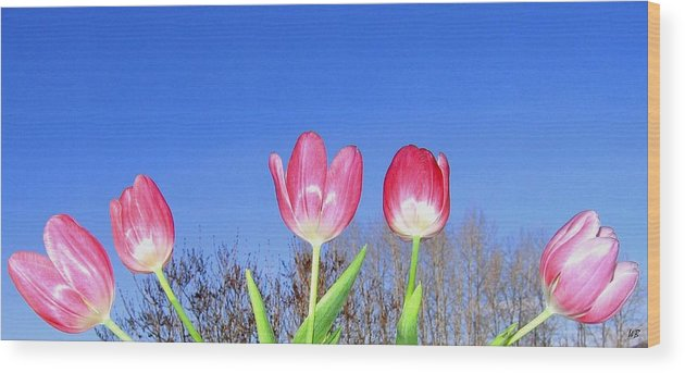Tulips Wood Print featuring the photograph Tulip Panorama by Will Borden
