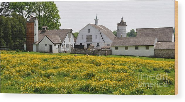 Yellow Wood Print featuring the photograph Bucks County Spring by Cindy Roesinger