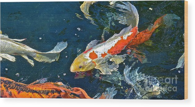Koi Wood Print featuring the photograph Koi by Jason Layden