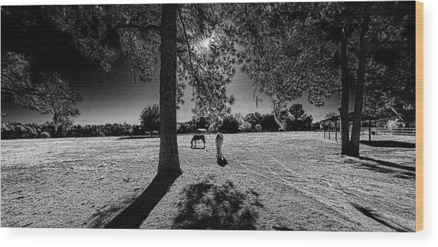 Horses Wood Print featuring the photograph 0336-221-bandw by Lewis Mann