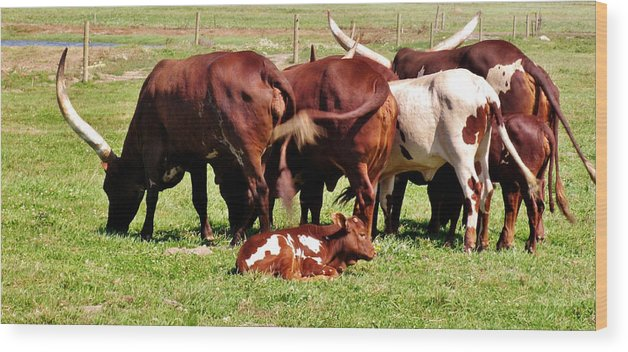 Fence Wood Print featuring the photograph Baby Longhorn by Marilyn Diaz