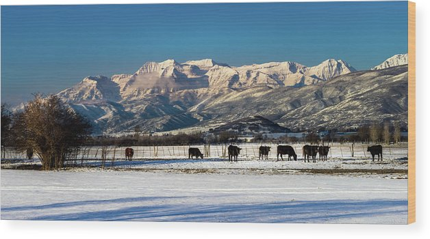 Bos Taurus Wood Print featuring the photograph Timpanogos From The North Fields by TL Mair