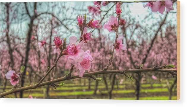 Peach Wood Print featuring the photograph Peachy by Mike Ronnebeck