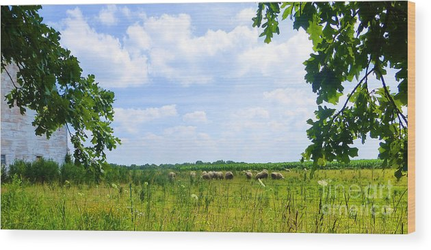 Farm Wood Print featuring the photograph Early Summer Morning by Tina M Wenger