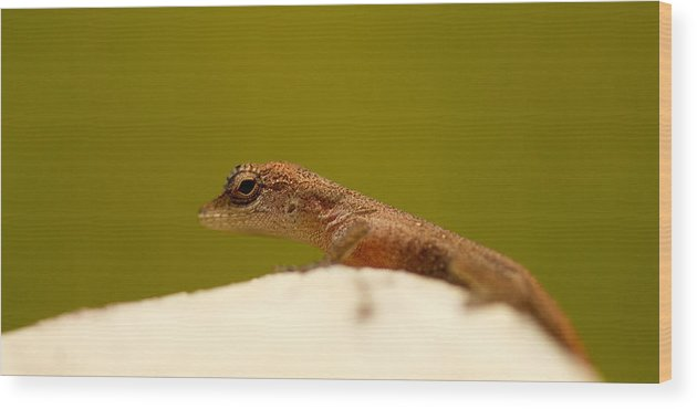 Lizard Wood Print featuring the photograph Eye See You by Shane Holsclaw