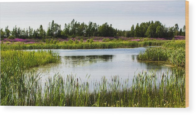 Landscape Wood Print featuring the photograph Fireweed Paradise by Valerie Pond
