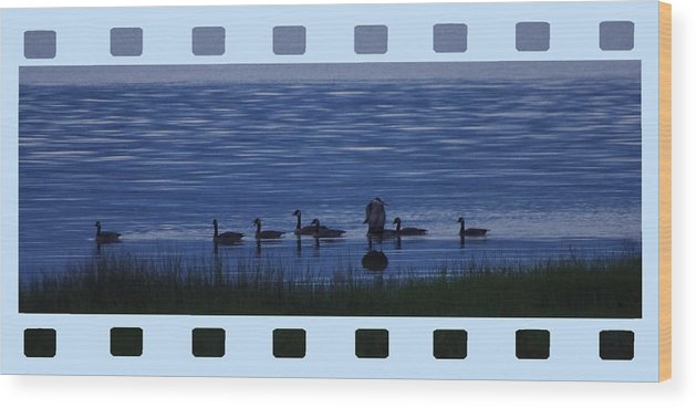 Geese Wood Print featuring the photograph Home Coming by Ming Yeung