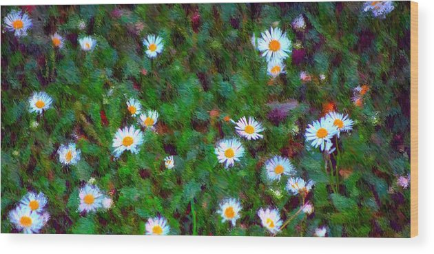 Digital Photograph Wood Print featuring the photograph Field Of Daisys by David Lane