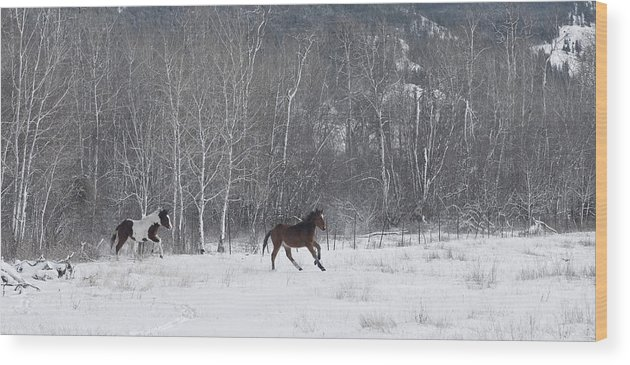 Horses Wood Print featuring the photograph Run Like The Wind by Peter Olsen