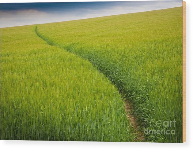 Photograph Wood Print featuring the photograph Green Field by Michael Hudson