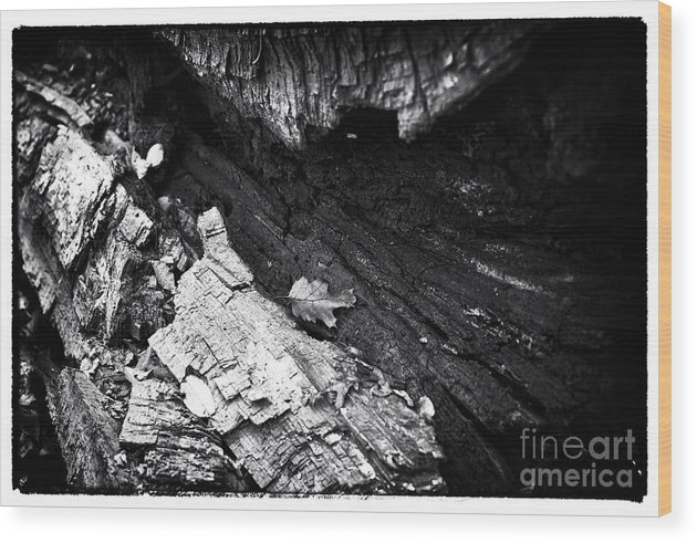 Hide In Plain Sight Wood Print featuring the photograph Hide In Plain Sight by John Rizzuto