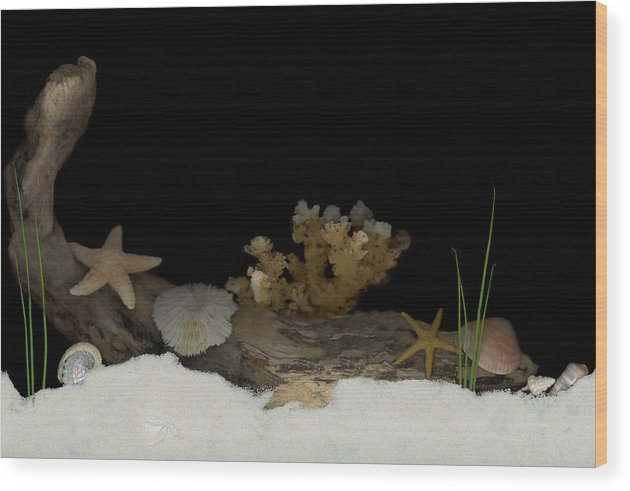 Shells Wood Print featuring the mixed media Down Under by Sandi F Hutchins