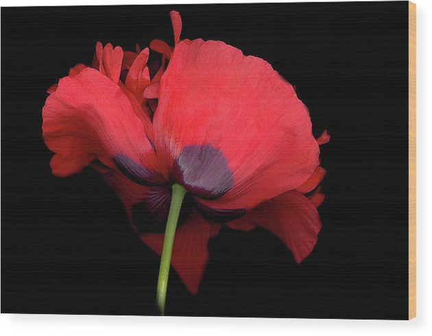 Red Poppy Wood Print featuring the digital art Red Poppy by Sandi F Hutchins
