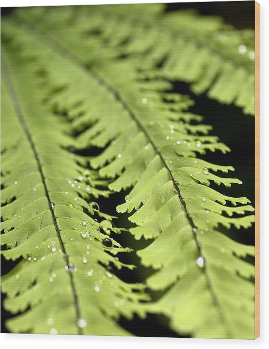 Ferns Wood Print featuring the photograph Fern by Jessica Wakefield
