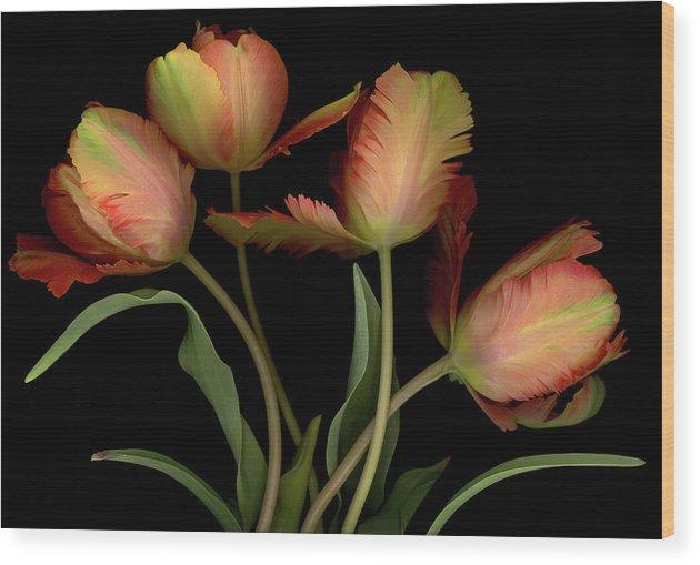 Tulips Wood Print featuring the digital art Splash of Spring by Sandi F Hutchins