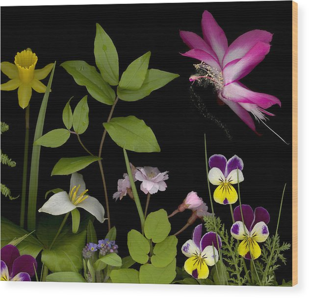 Spring Flowers Wood Print featuring the photograph Fairy Dust by Sandi F Hutchins