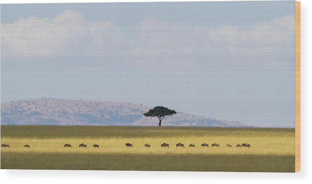 Kenya Wood Print featuring the photograph Masai Mara Wildebeest Migration by Universal Stopping Point Photography