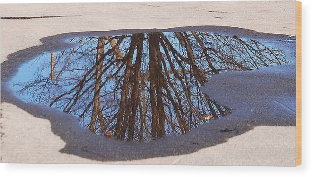 Reflection Wood Print featuring the photograph Reflection by Lisa Kane