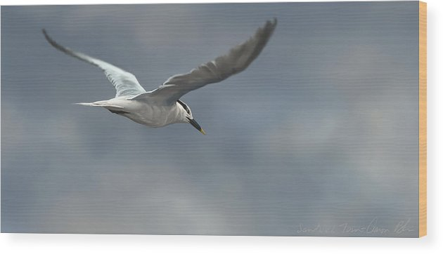 Bird Wood Print featuring the digital art Sandwich Tern by Aaron Blaise