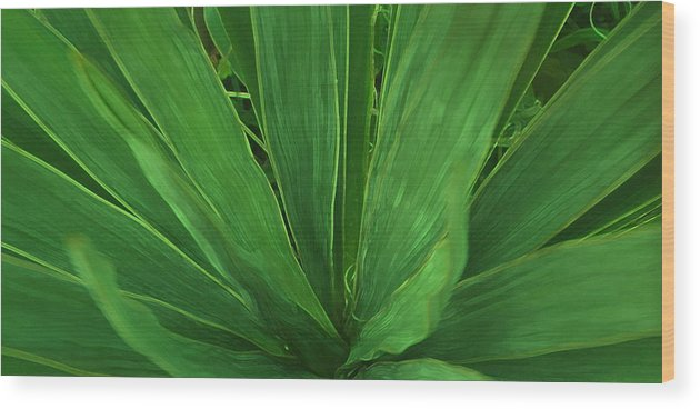 Green Plant Wood Print featuring the photograph Green Glow by Linda Sannuti