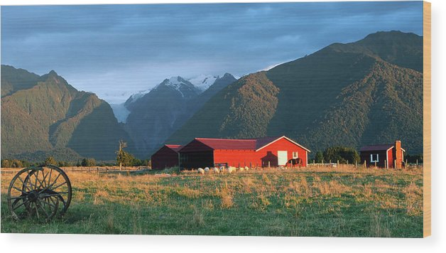 Horse Wood Print featuring the photograph Fox Glacier Looms Over Plain by Dmathies