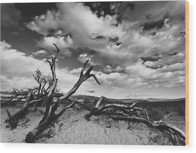 Landscape Wood Print featuring the photograph Dead Trees at Mesquite Dunes by Nathan Spotts