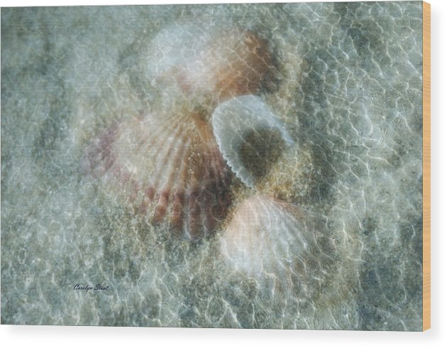 Shells Wood Print featuring the photograph Step Lightly by Carolyn Staut