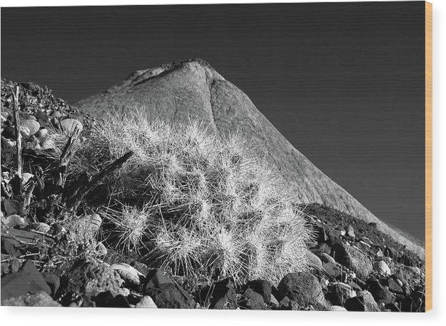Cactus Wood Print featuring the photograph Lajitas Cactus No. 1 by Al White