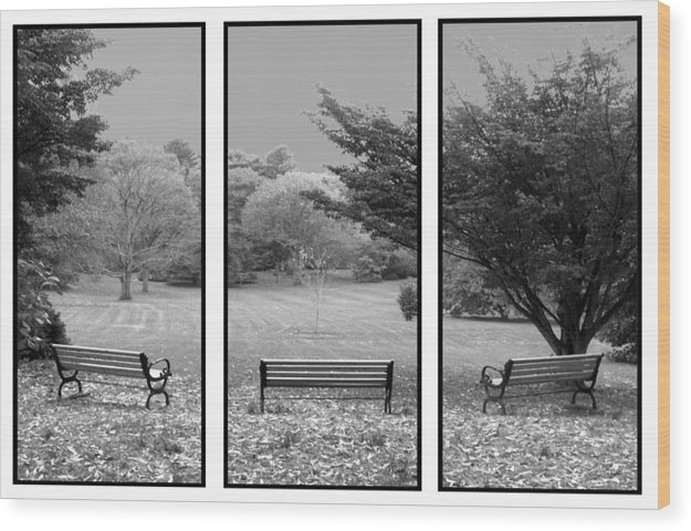 Nature Wood Print featuring the digital art Bench View Triptic by Tom Romeo