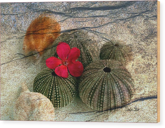 Shells Wood Print featuring the photograph A Soft Touch by Carolyn Staut