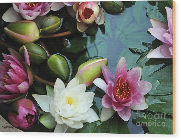 Lily Wood Print featuring the photograph Water Lilly by Haleh Yaghmai