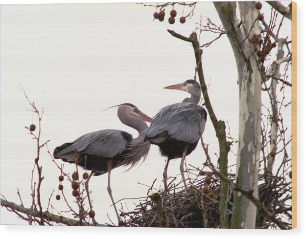 Great Blue Heron Wood Print featuring the photograph 070406-96 by Mike Davis