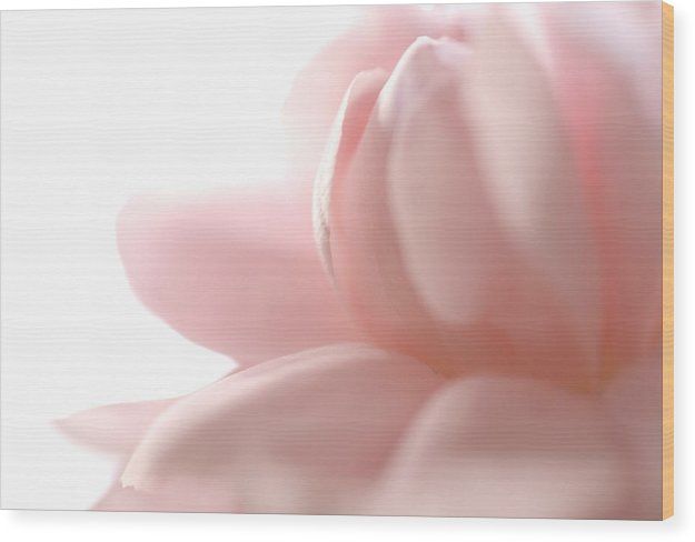 Pink Wood Print featuring the photograph Flower Abstract by Jessica Wakefield