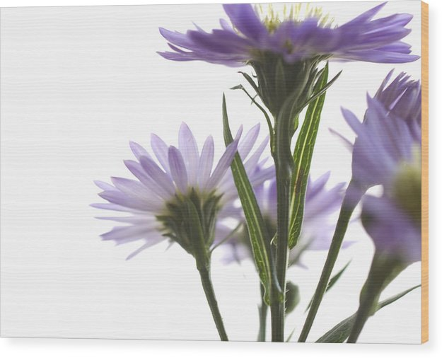 Flowers Wood Print featuring the photograph Flower Abstract by Jessica Wakefield