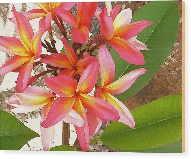 Hawaii Iphone Cases Wood Print featuring the photograph Plantation Plumeria by James Temple