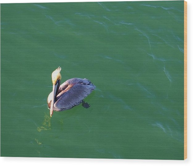 Pelicans Wood Print featuring the photograph In Love With The Green Earth. by E Luiza Picciano