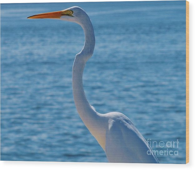 America Wood Print featuring the photograph Great Egret White Heron by E Luiza Picciano