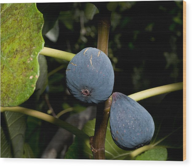 Figs Wood Print featuring the photograph Figs by Jim DeLillo