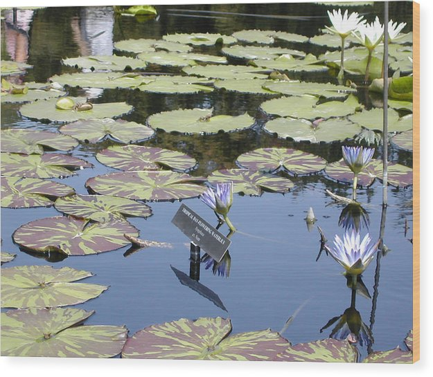 Lillies Wood Print featuring the painting Longwood Lillies by Randy Ford