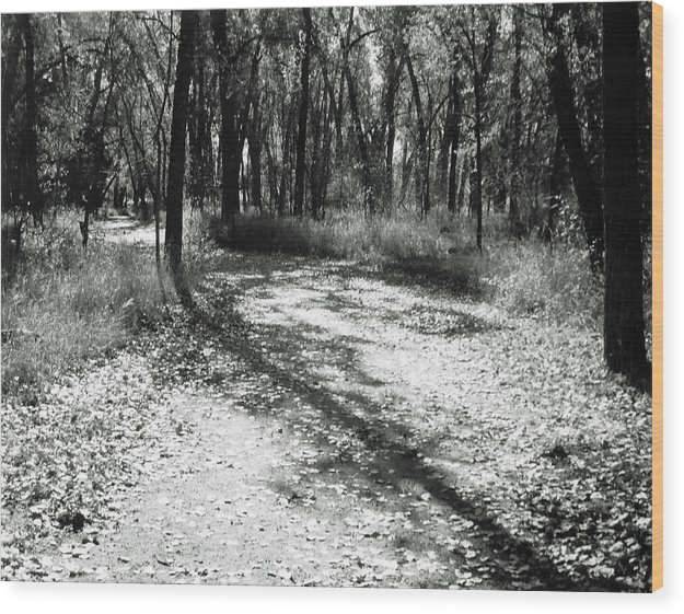 Landscape Wood Print featuring the photograph Shadow Path by Allan McConnell