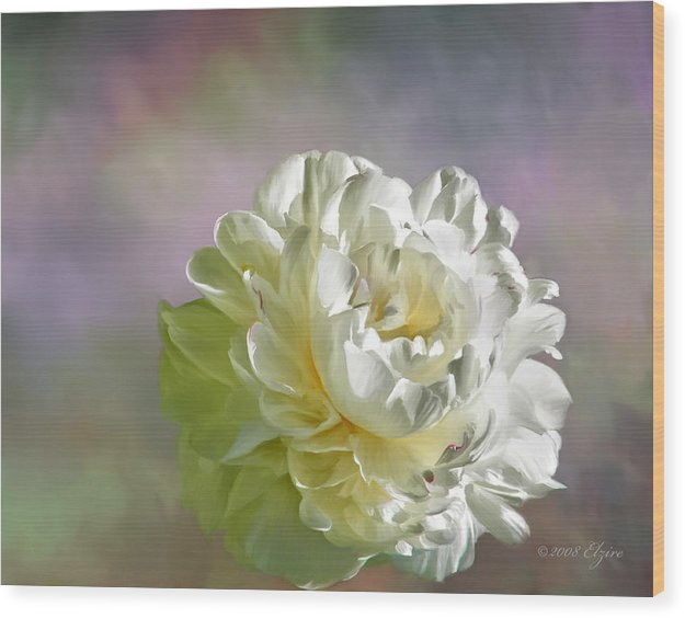 White Peony Wood Print featuring the painting Lacy by Elzire S
