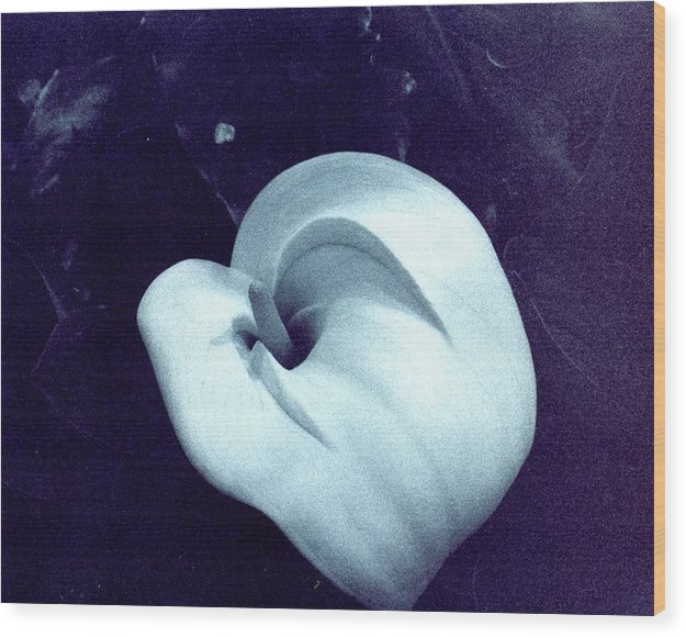 Lily Wood Print featuring the photograph Flavel Lily by Jennifer Ott