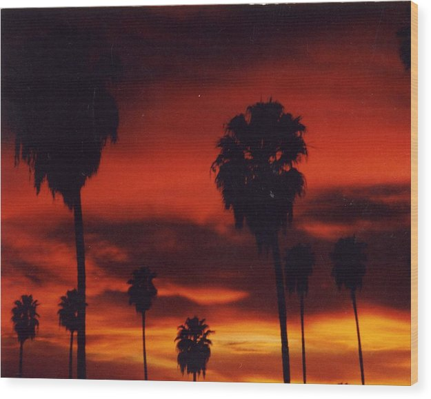 Palm Trees Wood Print featuring the photograph Hollywood Sunset by Jennifer Ott