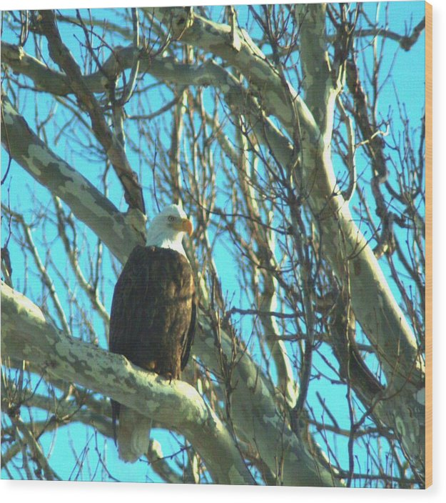 Eagle Wood Print featuring the photograph 020609-73 by Mike Davis