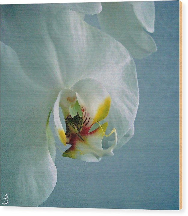 White Orchid Wood Print featuring the photograph F6 by Sarah-l Singer