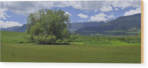 Beautiful Wood Print featuring the photograph Red Lodge Spring Scene Panorama 3 by Roger Snyder
