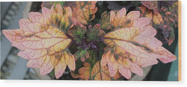 Flower Wood Print featuring the photograph Wings by Jessica Herndon