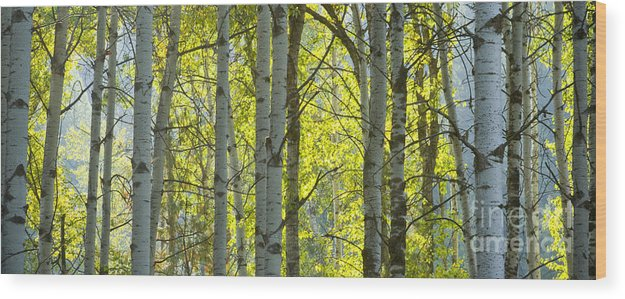 Trees Wood Print featuring the photograph Autumn Through The Trees by Idaho Scenic Images Linda Lantzy