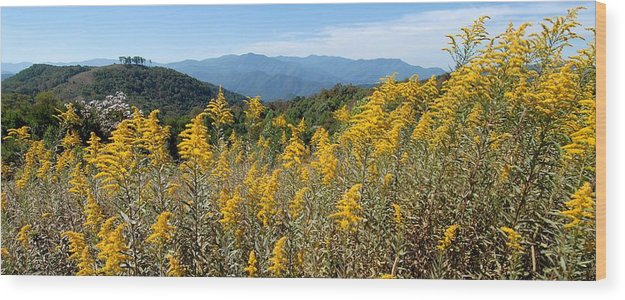 Mountain View Wood Print featuring the photograph Goldenrod Mountain View by Alan Lenk