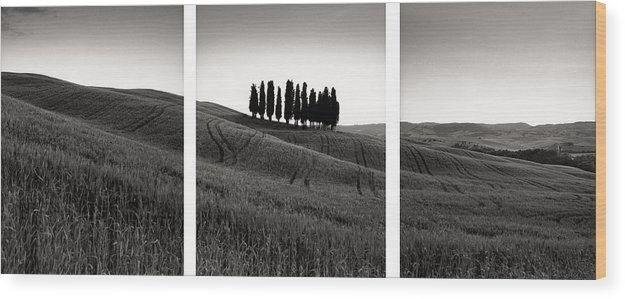 Tuscany Wood Print featuring the photograph Tuscany Triptych by Michael Hudson